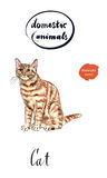 Ginger tabby cat. Hand drawn - watercolor vector Illustration Stock Image