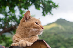 Ginger tabby cat lying on the roof. Royalty Free Stock Photo