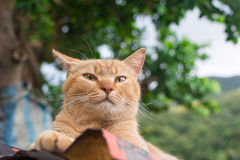 Ginger tabby cat lying on the roof. Stock Photos