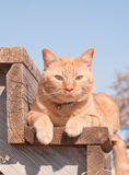 Ginger tabby cat resting on a wooden step Royalty Free Stock Photography