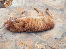 Ginger Tabby Cat Rolling autentico sulle pietre per lastricati Fotografia Stock Libera da Diritti