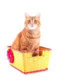 Ginger tabby cat sitting in a yellow basket, Royalty Free Stock Photography