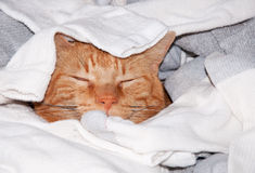 Ginger tabby cat sleeping in clean laundry royalty free stock images