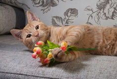Ginger tabby kitten lying on couch with bouquet Royalty Free Stock Image