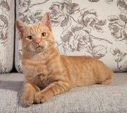 Ginger tabby kitten lying on couch Stock Photo