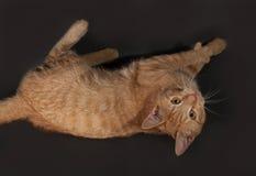 Ginger tabby kitten lying on dark gray Royalty Free Stock Photo
