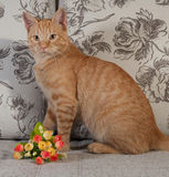Ginger tabby kitten sitting on couch with bouquet of flowers Royalty Free Stock Images