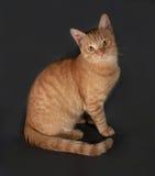 Ginger tabby kitten sitting on dark gray Stock Images