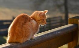 Ginger tom cat sitting on balcony Royalty Free Stock Photo