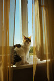 Ginger ttree color cat is sitting on Window sill Warm toning image. Lifestyle pet concept Stock Photography