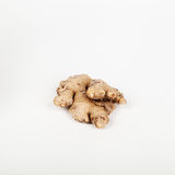 Ginger on white background. Shot in studio royalty free stock photography