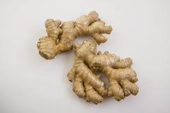 Ginger on white Royalty Free Stock Photo