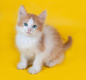 Ginger and white kitten with blue eyes sitting on yellow Royalty Free Stock Photo