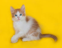 Ginger and white kitten with blue eyes sitting on yellow Stock Photography