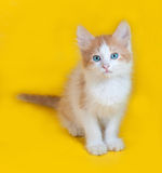Ginger and white kitten with blue eyes sitting on yellow Royalty Free Stock Images