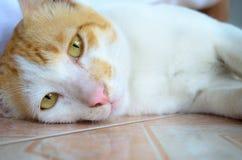 Ginger and White Kitten Stock Photos