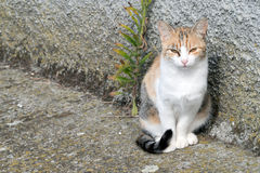 Ginger and white stray kitten in street background. Cute. Royalty Free Stock Photos