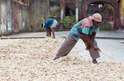 Ginger workers in Fort Cochin, India. COCHIN, INDIA - JANUARY 22, 2016: Ginger workers laying out ginger into piles at old ginger factory in Fort Cochin Stock Images