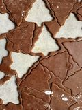 Gingerbread Christmas cookie dough rolled and cut into tree shapes Royalty Free Stock Photo