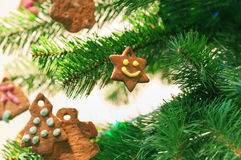 Gingerbread cookies on christmas tree Stock Photos