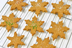 Gingerbread cookies. Fresh, hot. homemade star shaped gingerbread cookies on cooling rack Royalty Free Stock Photos