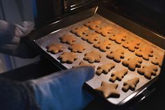 Gingerbread cookies fresh out of the oven Royalty Free Stock Photography