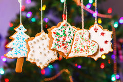Gingerbread cookies hanging with Christmas tree on background. Royalty Free Stock Photo