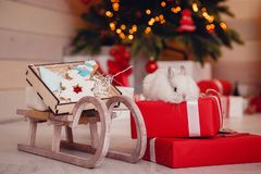 Gingerbread deer new year stock photography