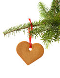 Gingerbread heart. Hanging under fir branch and isolated against white background Royalty Free Stock Photo