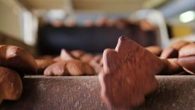 Gingerbread just baked. Gingerbread moves along the conveyor belt and fall down. The focus changes between the foreground and background stock video footage