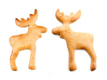 Gingerbread moose cookies Royalty Free Stock Photo