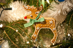 Gingerbread Rudolph Stock Images