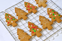 Gingerbread tree cookies. Fresh, hot. homemade tree shaped gingerbread cookies on cooling rack Stock Image