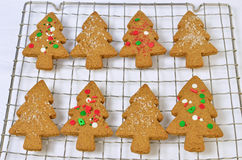 Gingerbread tree cookies. Fresh, hot. homemade tree shaped gingerbread cookies on cooling rack Royalty Free Stock Photos