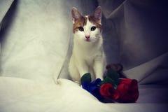 Gingercat με τα λουλούδια σε άσπρο Backgrond στοκ εικόνες