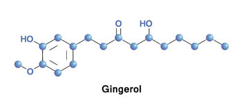 Gingero ginger spiciness Stock Photography