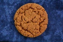 Gingersnap sur le bleu Photographie stock libre de droits