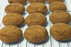Gingersnaps Photo libre de droits