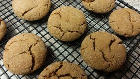 Gingersnaps Royalty Free Stock Image