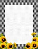 Gingham Check Frame. Gold Pansy Flowers, Polka Dot. Gold spring pansy flowers, black and white gingham check frame, polka dot background, copy space for posters Stock Photos