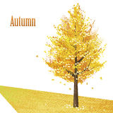 Gingko avec les feuilles d'or en automne en retard Images stock