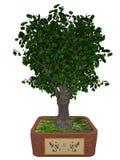 Gingko biloba tree bonsai - 3D render Royalty Free Stock Image