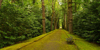 Gingko trees alley in Terra Nostra park in Furnas, Azores, Portugal. Stock Images