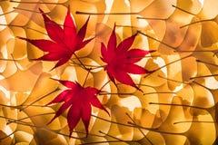 gingkoen för höstbakgrundsbilobaen låter vara lönn Royaltyfri Foto