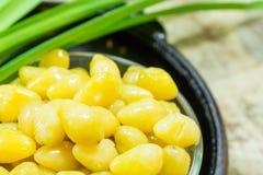 Φρούτα Ginkgo Στοκ Εικόνες