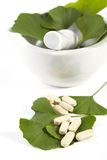 Ginkgo biloba. In the mortar with the medicines Royalty Free Stock Photo