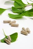 Ginkgo Biloba. Extract pills and fresh  leaves best suited for aged people alternative medicine ads Stock Image