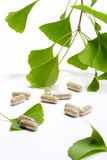 Ginkgo Biloba Stock Photography
