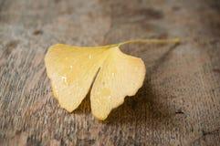 Ginkgo biloba automnal leaf on wooden background Royalty Free Stock Image