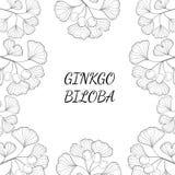 Ginkgo Biloba, background 1 Stock Photo